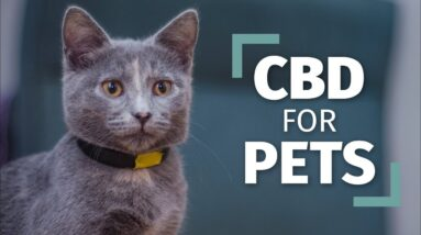 CBD for Pets | The Right Way To Introduce CBD To Your Pets [Complete Guide]