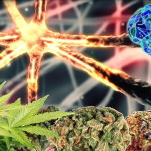CANNABASICS - THE ENDOCANNABINOID SYSTEM