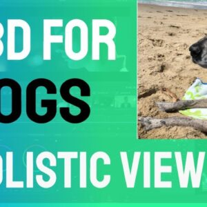 CBD For Dogs - A Holistic Approach - Worked for My Dog