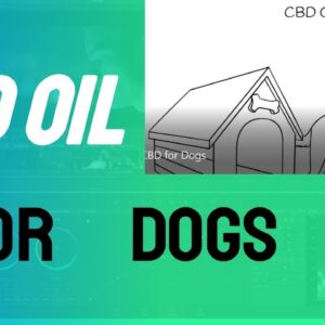 CBD for Dogs- What You Need to Know