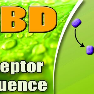 CBD Influence Over Various Receptors - azWHOLEistic