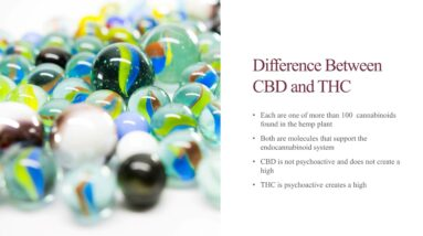 Educational Series (7 of 31): The Difference Between CBD and THC