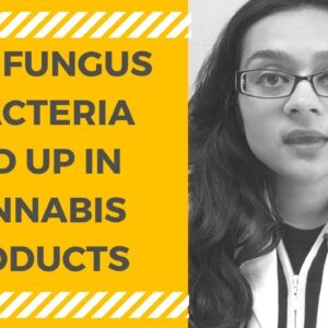 HOW FUNGUS & BACTERIA END UP IN CANNABIS PRODUCTS