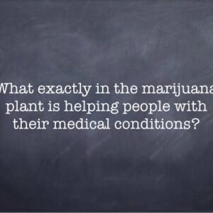 What exactly in the marijuana plant is helping people with their medical conditions?