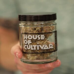 Inside the Tissue Culture at the House of Cultivar - Only the Best