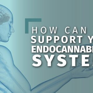 Natural Ways to Boost Your Endocannabinoid System [8 tips]