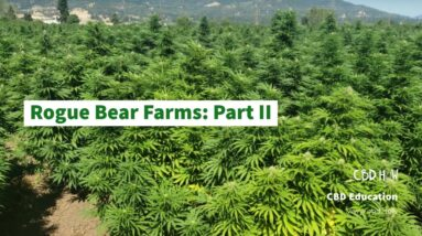 Rogue Bear Farms: Part II