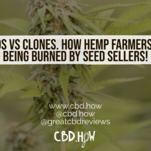 Seeds vs clones. How farmers are being burned by bad seeds!