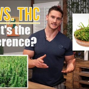 CBD vs THC - What is the Difference? How CBD and THC Work in the Body by Thomas DeLauer
