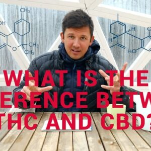 THC vs CBD . What Is The Difference?