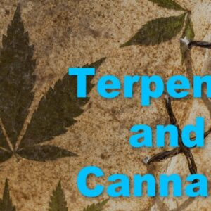 What are Terpenes in Cannabis - How do they affect CBD Oil?