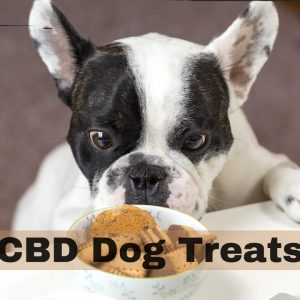 CBD Dog Treats - A convenient way to help your dog live the best life posssible.
