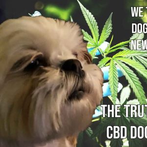 The Truth About CBD Dog Treats | NYE 2021 with Fireworks and CBD Treat Test | Do They Really Work?
