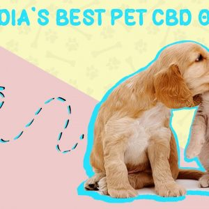 Best CBD Oils for Pets Review in 2021 | Hempstrol