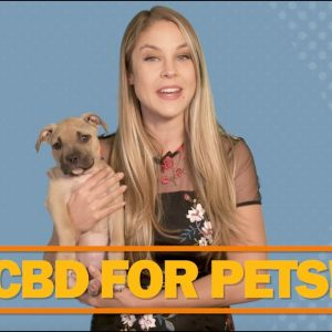CBD for Dogs!