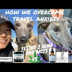 CBD OIL FOR DOGS | WHICH ONE WORKED | DOG CAR ANXIETY | ROAD TRIP