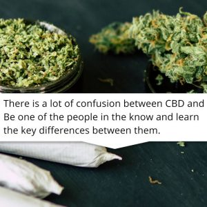 CBD vs THC : Here is how they are different