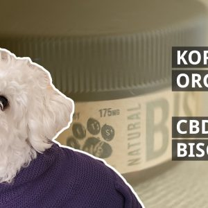 Frank's Dog Tries the CBD Pet Biscuits from Kore Organic