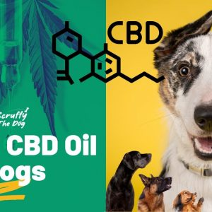 CBD Dogs Oil For Dogs | Relief anxiety, stress, fear of storms, fear of thunder,  stress in dogs.