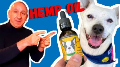Hemp Oil For Dogs | The Benefits Of Using CBD Or Hemp Oil For Your Dog