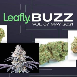 Leafly Buzz Vol. 07 🐝 May 2021 Edition