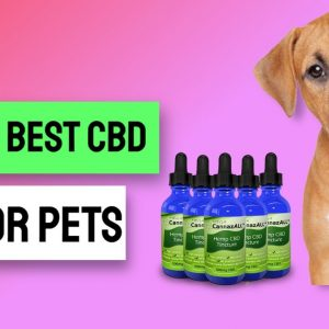 Miracle Cure For Dog Cancer - Best Cbd Dog Treats For Cancer