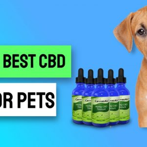 Cbd For Dogs Canada  - Where To Buy Cbd Oils And Cbd Dog Treats For Your Dogs In Canada  😊💕😍