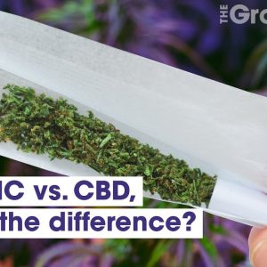 THC vs. CBD, what's the difference? | Weed Easy