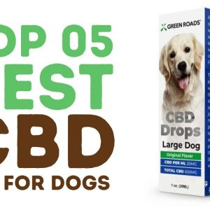 Top Best CBD Oil for Dogs