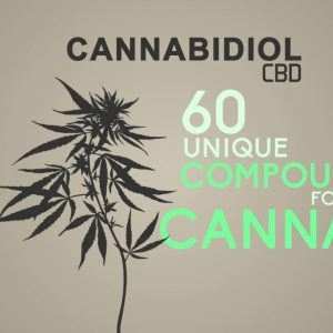 What is Cannabidiol- CBD  In 60 Seconds