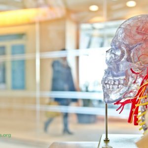 Does Marijuana Cause Permanent Brain Damage in Adults?