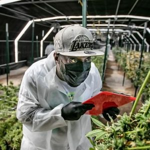 Green Light to Grow Part One of New Mexicos Recreational