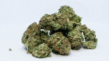 Mould Contamination Leads To UK Medical Cannabis Recall