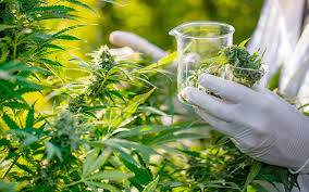 New reports reveal more details on the medical cannabis market