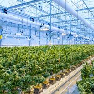 Texas is expanding access to medical cannabis
