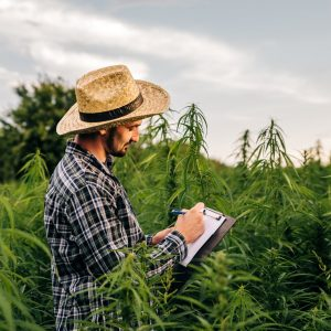 The 7 Most Desirable Skills in Cannabis Right Now