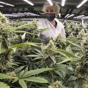 The New Jersey cannabis industry is pulsing with the first