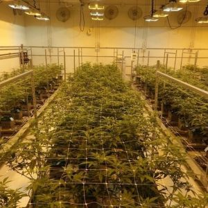 The term substantial could benefit the cannabis business