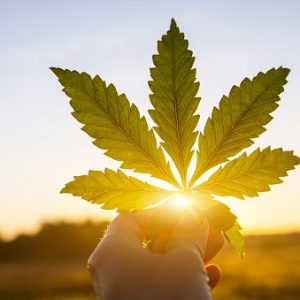 Why Investors Can Be Cautiously Optimistic About Big US Cannabis