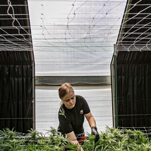 New Mexico Residents Express Concerns About Cannabis Production Rules