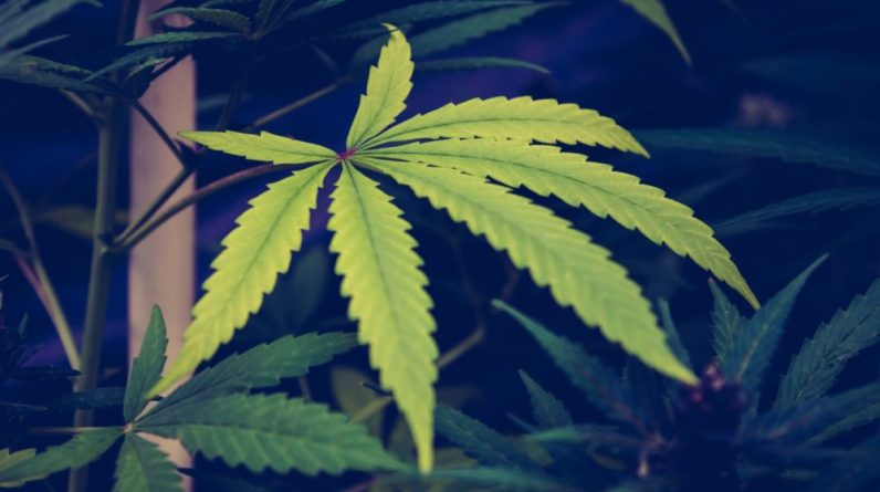 Will Argentinas Economic Recovery be Powered by Hemp and Medicinal