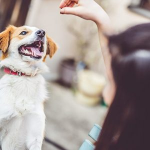 Medical Cannabis Portal Launched For US Veterinarians