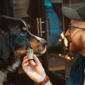 Argentina and the use of medical cannabis for pets